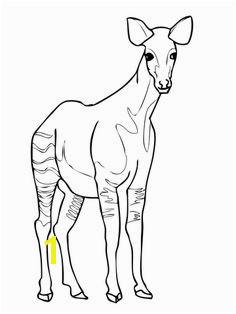Okapi coloring page Free Printable Coloring Pages Printable Crafts Okapi Homeschool Kindergarten