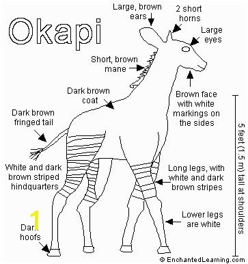 okapi 6 638 cb=