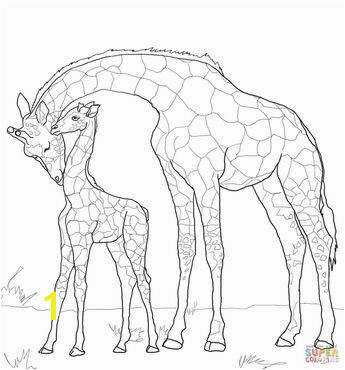 Modest Okapi Coloring Page Amazing Giraffid Printable Pict Styles And