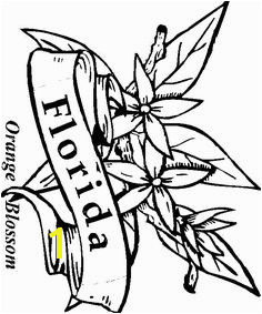 images of florida state flowers coloring pages Google Search Page Usa Coloring Pages For