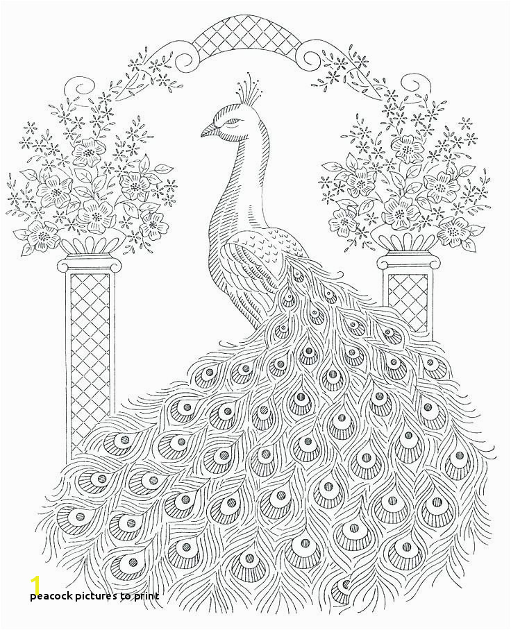 Peacock to Print Peacock Feather Coloring Page New Coloring Pages Peacock Coloring