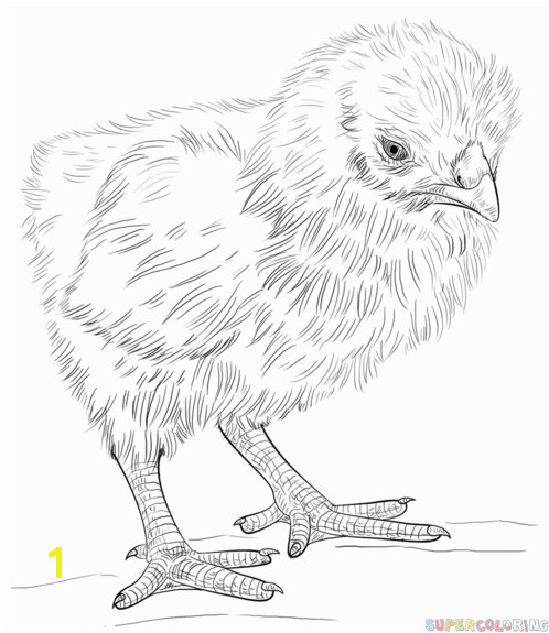 How to draw a baby chick step by step Drawing tutorials for kids and beginners