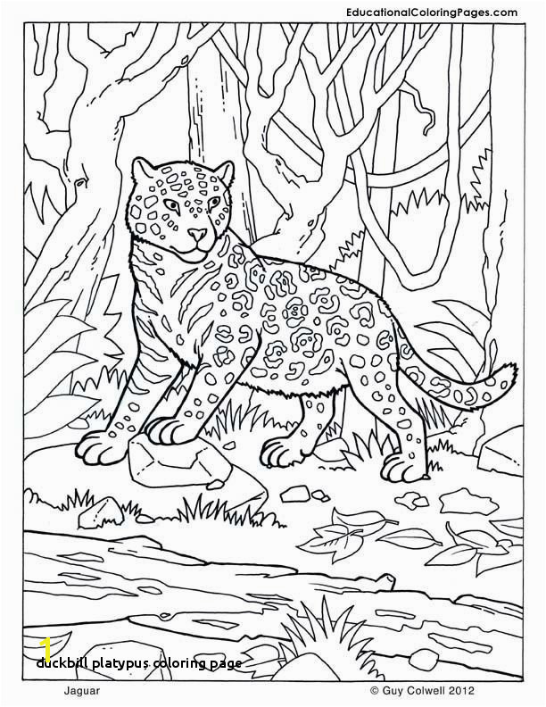 Platypus Coloring Pages to Print Duckbill Platypus Coloring Page 19 Luxury Platypus Coloring Page
