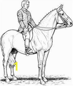 coloring Horse Coloring Page pages good horse page wecoloringpage good Horse Coloring Page horse coloring page wecoloringpage pages horses jumping vi