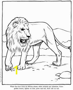 Lion coloring page sheet Zoo animals Zoo Animal Coloring Pages Mermaid Coloring Pages