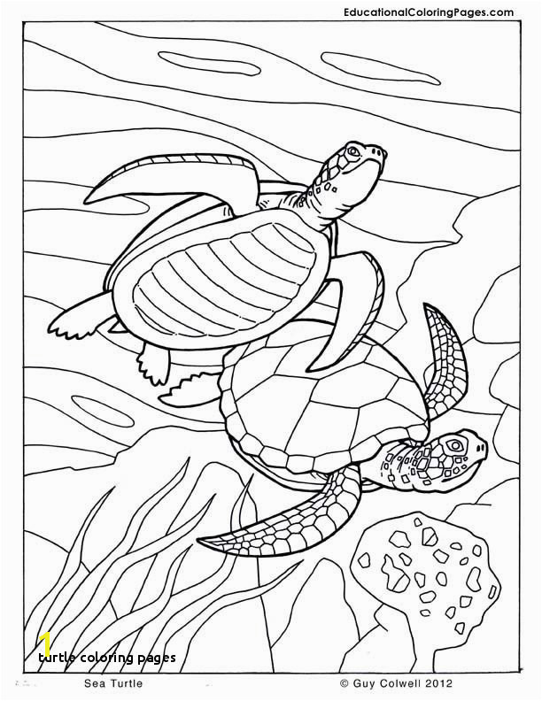 Turtle Coloring Pages 371 Best Coloring Book Fish Sea Life Seashells Ocean