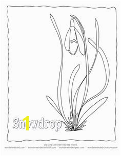 Snowdrop Flowers to Color Snowdrop from our Flower Flower Coloring Sheets