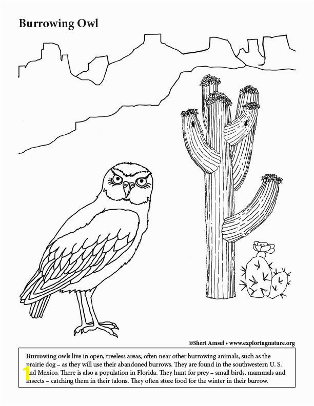 Learn about and color Animals on Exploringnature Coloring Habitats and Animals Pinterest