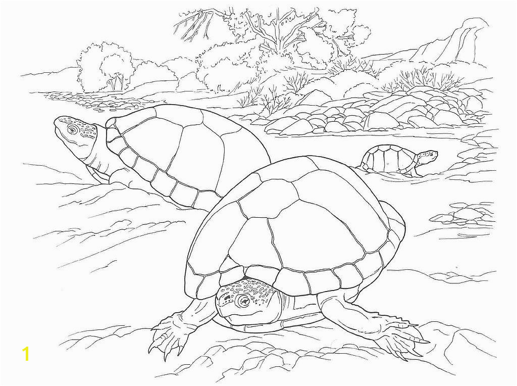 The desert tortoise is a timid reptile that lives in sandy deserts the Mojave and Sonoran of southwestern North America Description from homethesign