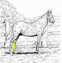 Appaloosa Horse with Leopard Spotted Coat coloring page from Horses category Select from printable crafts of cartoons nature animals