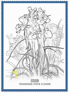 Tennessee State Tree Coloring Page 150 Best Usa State Flowers Images On Pinterest