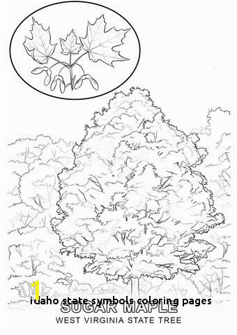 West Virginia State Tree coloring page from West Virginia category