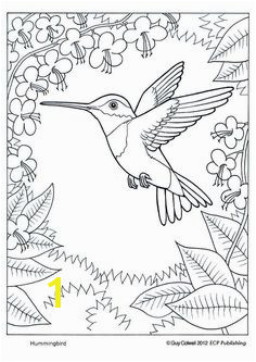 humming bird coloring page Animal Coloring Pages Coloring Pages For Adults Colouring Pages