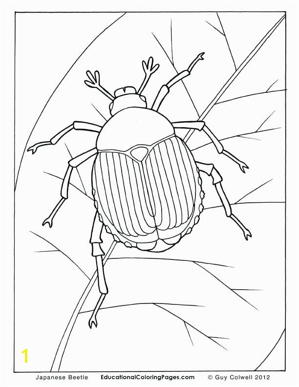 beetle coloring page coloring pictures of insects insect coloringColoring Pages Insects 16
