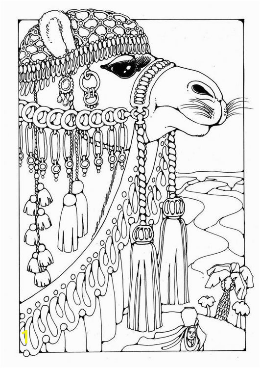 free Coloring page Camel