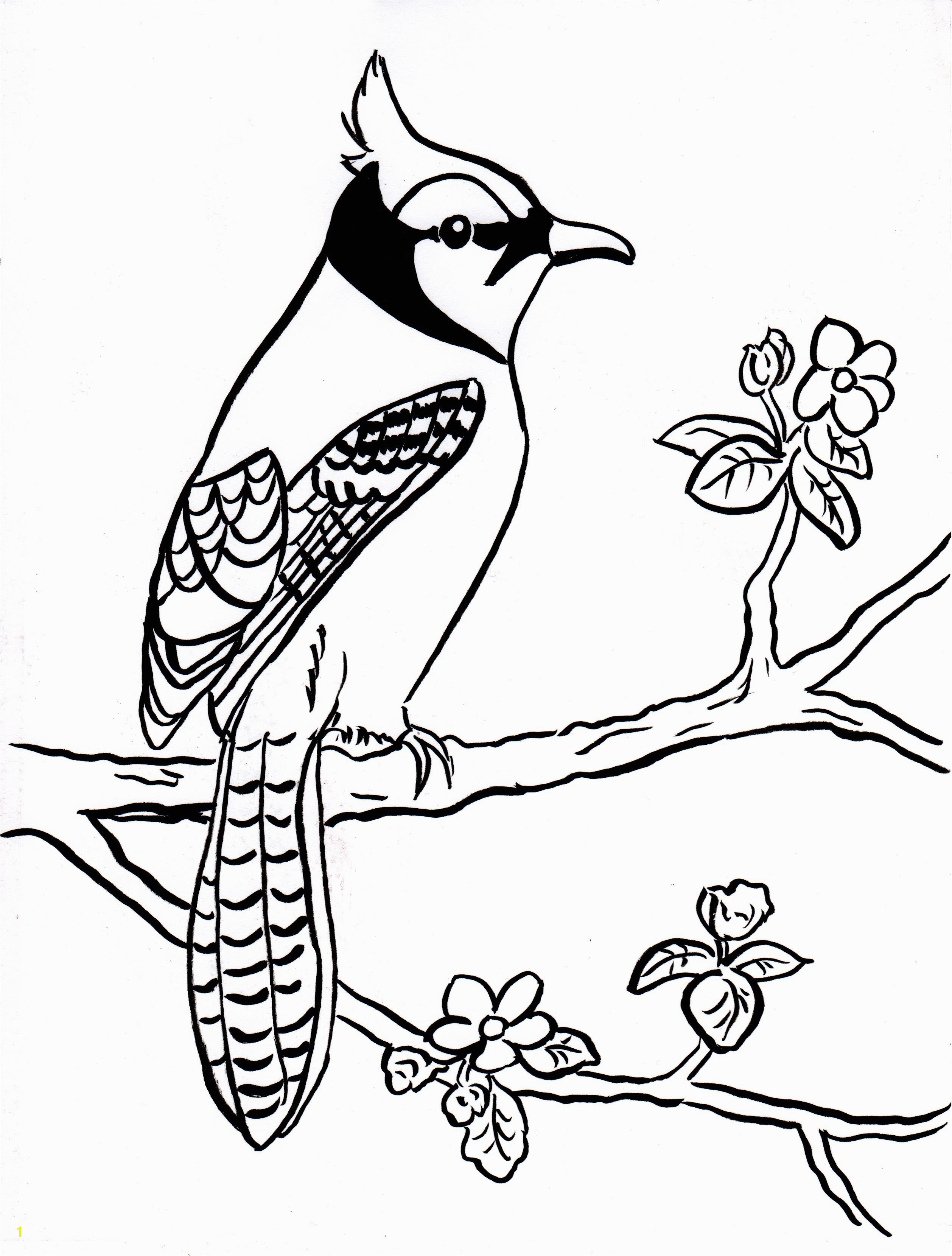 Toronto Blue Jays Logo Coloring Pages Blue Jay Coloring Page Coloring Pages