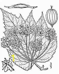 Nature coloring pages and resources to teach kids about nature Trees lakes volcano iceberg and volcano coloring sheets included