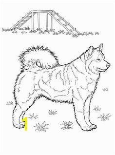 Weimaraner Coloring Pages Unique 3 2k Best Dog Patterns Pinterest 16 Beautiful Weimaraner