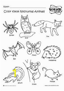 Nocturnal animals coloring sheets