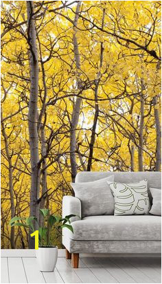 Autumn Scenic Colorful Yellow Aspen Trees Tree Wallpaper MuralTree