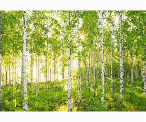 Aspen Tree Wall Mural Sunday 8 519 Wall Mural to In 2019