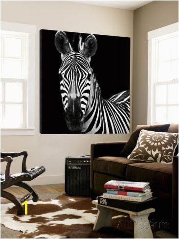 Zebra II Prints by Debra Van Swearingen at AllPosters Wall Decals Wall Mural