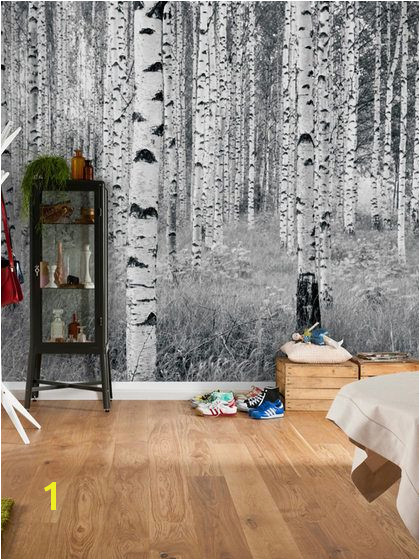 Birch Forest Wall Mural by Brewster at Gilt