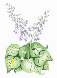Hosta Flower Wall Stencil