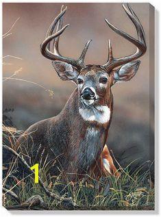 Deer s Deer Deer Pics Predator Hunting Deer Hunting Buck