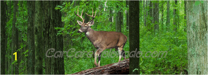 Buck deer in the woods scene Rear Window Graphic