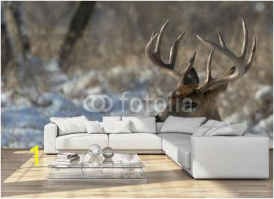 Whitetail Deer Wall Murals Big Deer National Wall Mural Threaded Wallpaper Murals