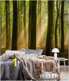Forest landscape Wall mural