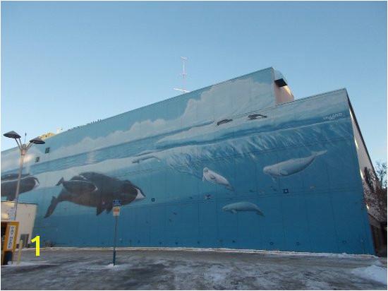 Wyland Murals Robert Wyland 54th Whaling Wall Jc Penny Bldg Anchorage Ak