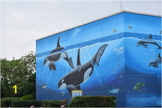 Wyland Murals Whaling Wall Picture Of Whaling Wall south Padre island Tripadvisor