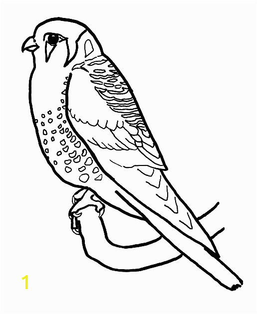 american kestrel coloring pages 3