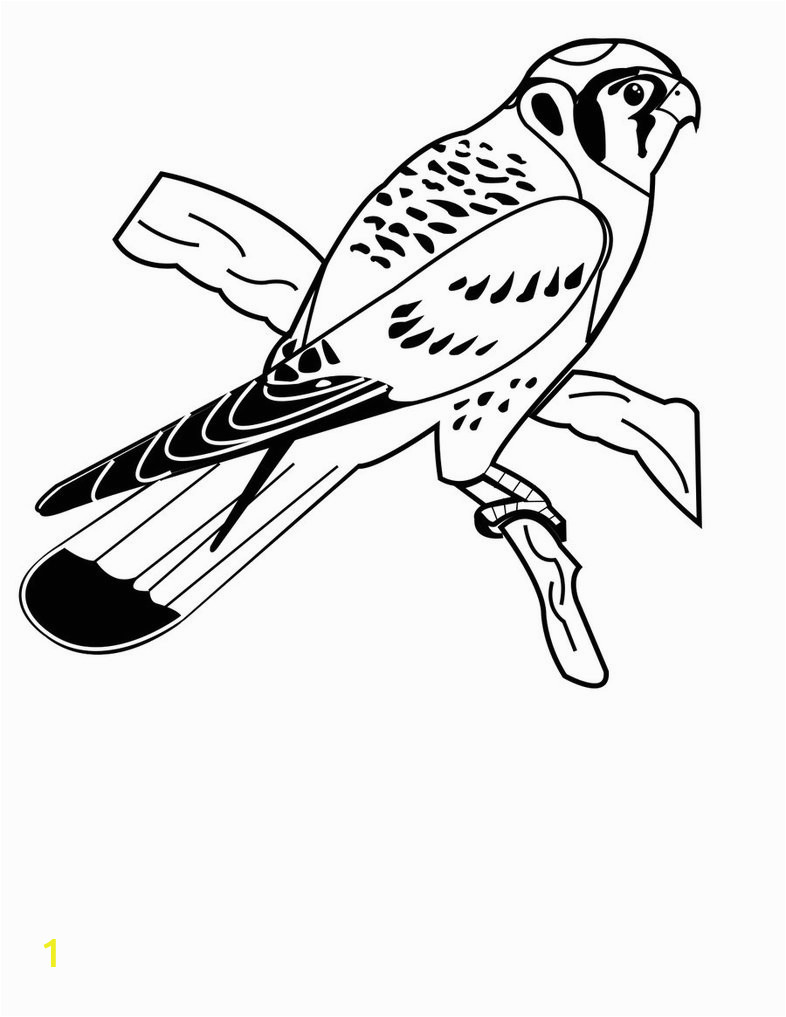 american kestrel coloring pages 1