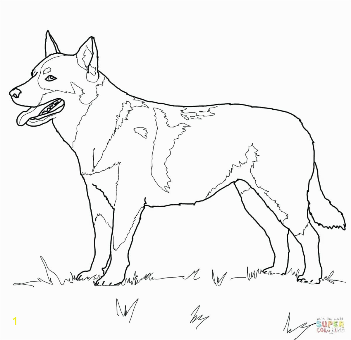 quick dog colouring sheets cattle c