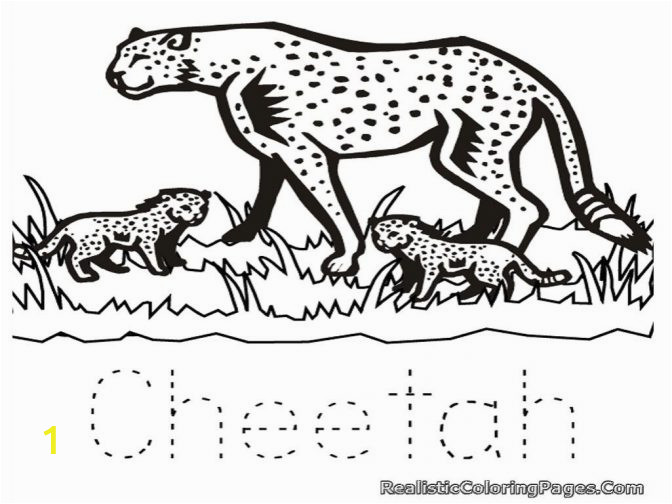 cute baby cheetah coloring pages real color ltkrpyqxc staggering animal image 672x504