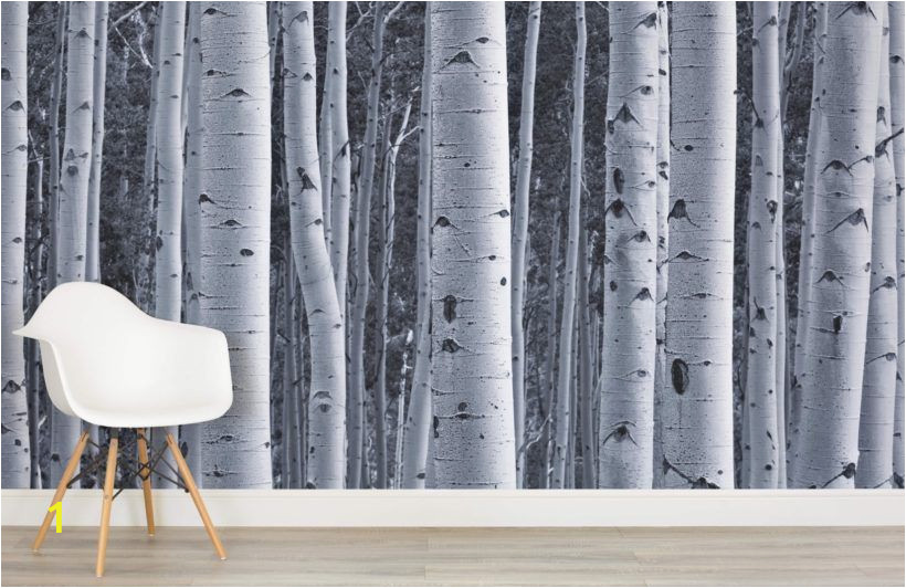Birch Tree forest Wall Mural Silver Birch Wallpaper Birch Tree forest