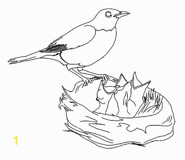4bef6db c3e0ef92da6e00fdff5 baby bird coloring page 9 9241 600 521
