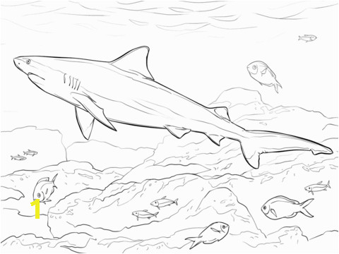 a561a94c2dd a66a6d0e2dc realistic bull shark coloring page free printable coloring pages 480 360