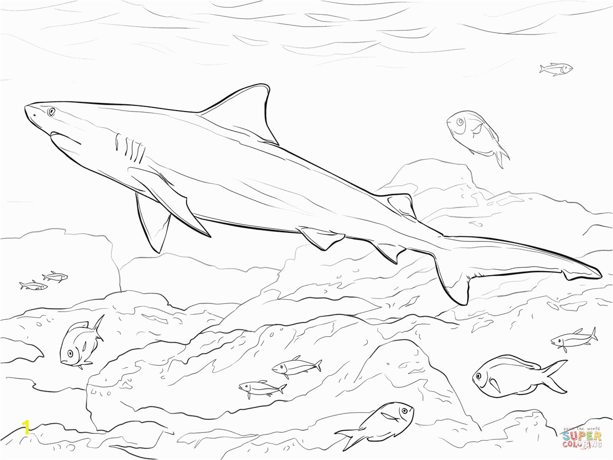 3ff3d3e4deb9b1cc1f3fd42ced705bde realistic bull shark coloring page free printable coloring pages 1199 899