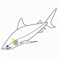 bull shark like zebra coloring pages