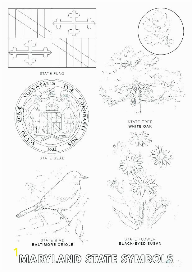 california state flag coloring page flags pages