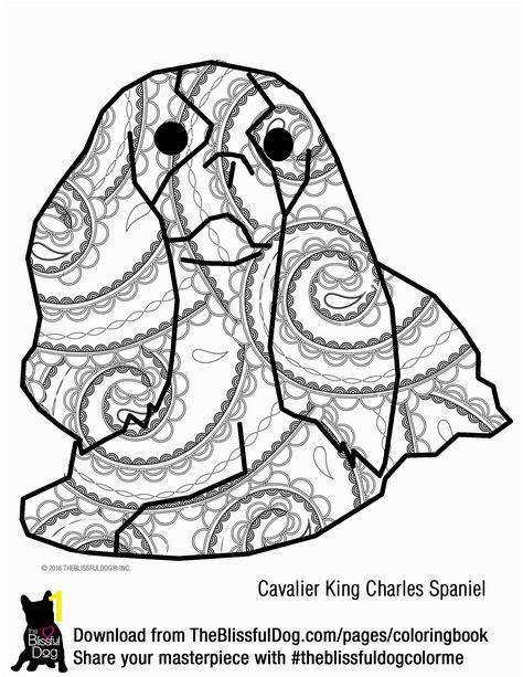 2ae8a566efa585ddbf ae28d2fb jewel tones king charles spaniels