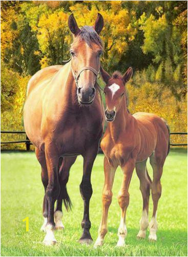 horse bed blanket