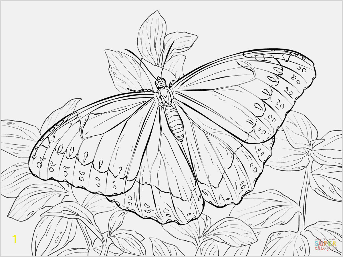 butterfly coloring pages free to print