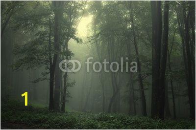 """Dark forest Wall Mural Wall Mural """"forest Summer Dark Green forest after Rain"""