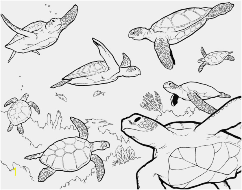 lost ocean coloring book pictures underwater animals coloring pages inspirational ocean animals of lost ocean coloring book