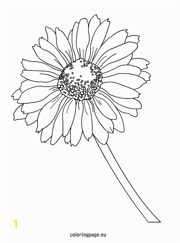 daisy coloring pages 13